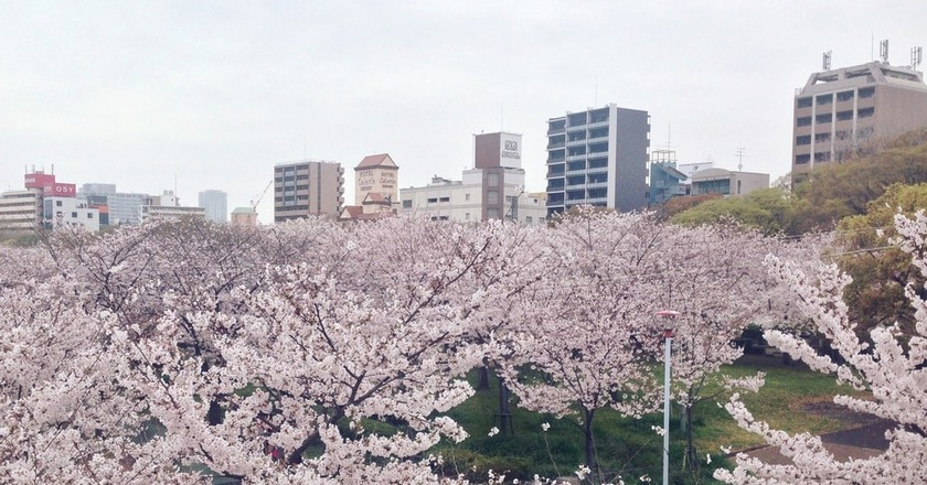 The Best Places to Have a Hanami Picnic in Osaka