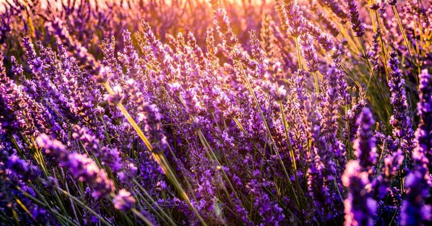 There are some lovely images captured in books about Provence |© Leonard Cotte/Unsplash