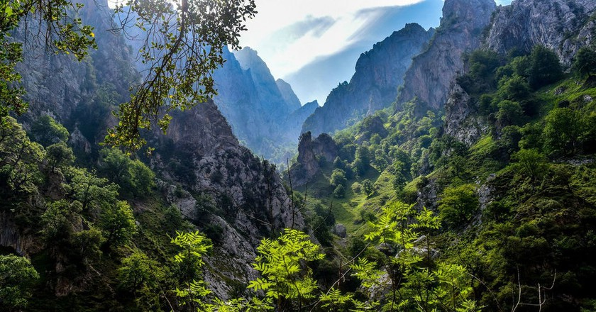 The Picos de Europa are home to Spain's brown bear | © javierAlamo / Pixabay