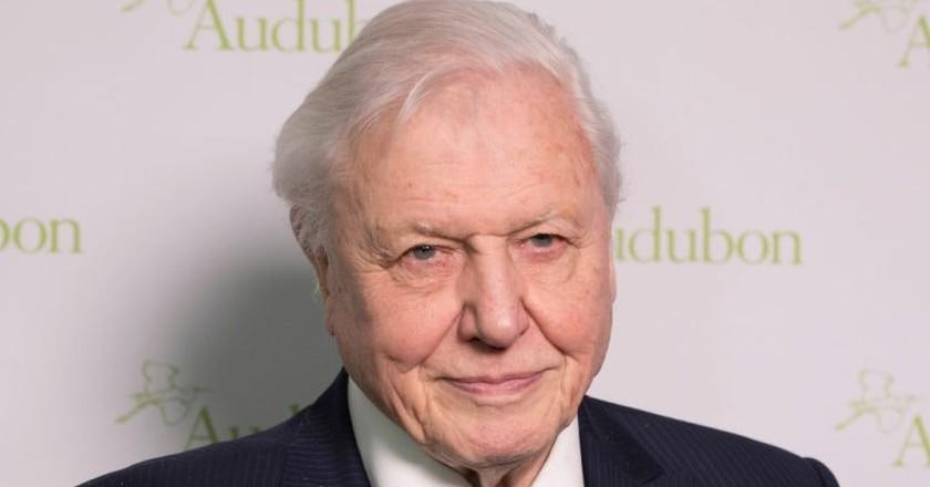 National treasure Sir David Attenborough