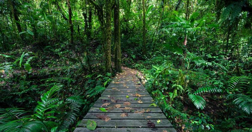 Hiking in Costa Rica's rainforest