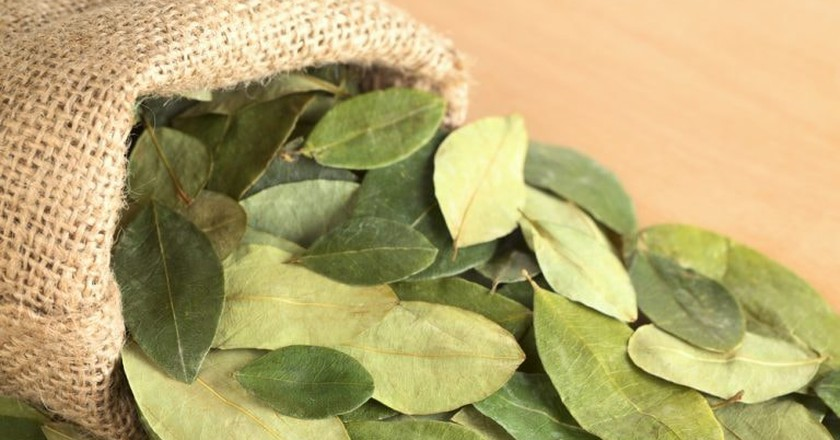 Dried coca leaves in jute sack
