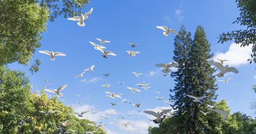 Birds take to the skies in Taichung Park | © 綾小路 葵 / Flickr