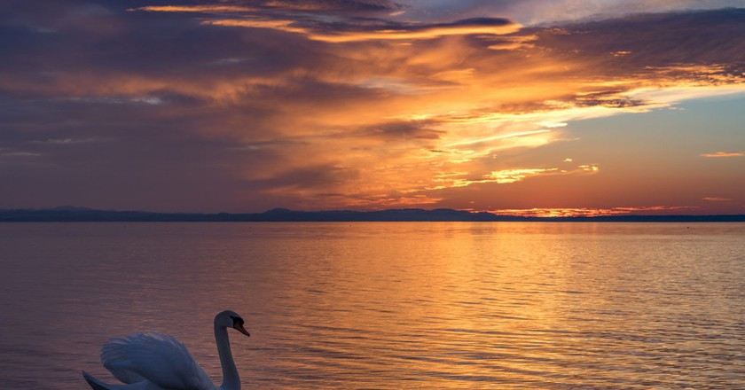A swan floating on Lake Constance