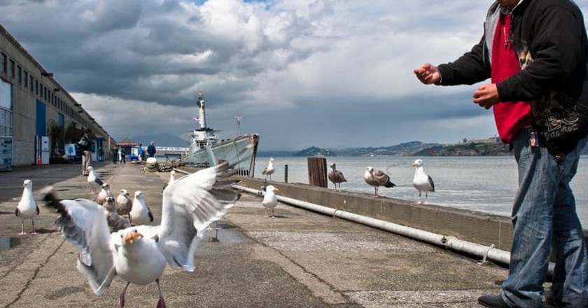 A seagull catching a snack