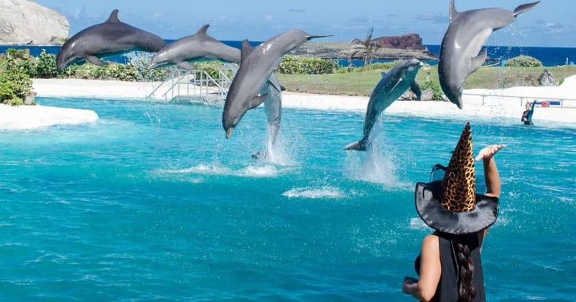 Sea Life Park dolphin show