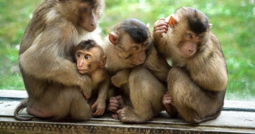 Monkey family in ZOOM Erlebniswelt Gelsenkirchen