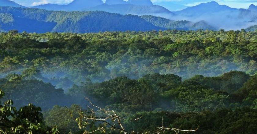 La Planada Natural Reserve, Colombia