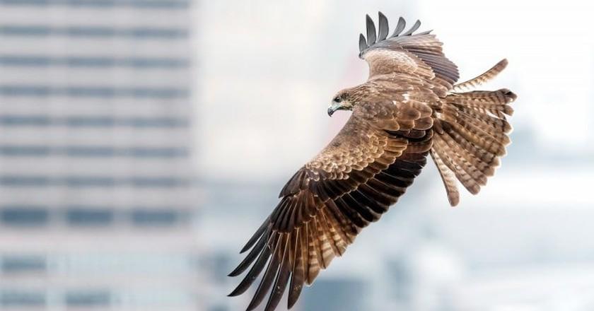 Where to Spot Hong Kong's Amazing Birds of Prey