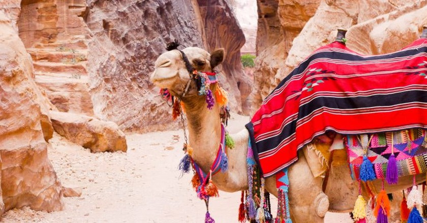 Experience the charms of Petra