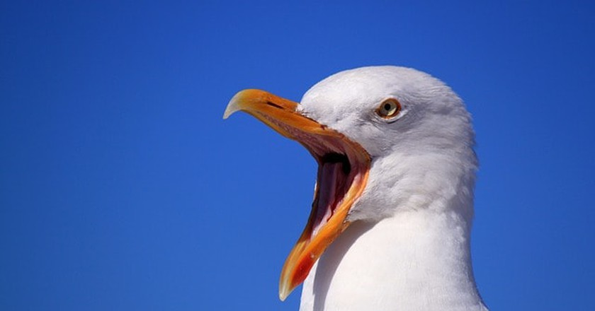 Man Whose Hotel Room Was Trashed by Angry, Pepperoni-Crazed Seagulls Is Forgiven