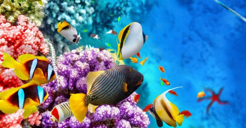 Corals and tropical fish