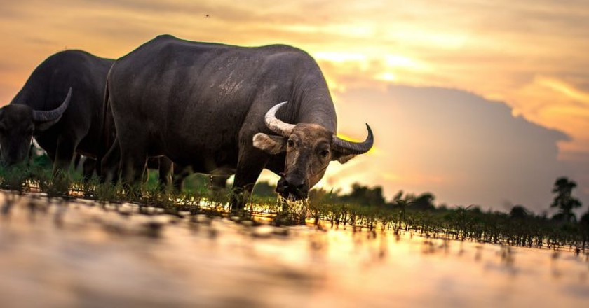 Scenes of rural Thailand | © John Jones / toolstotal.com