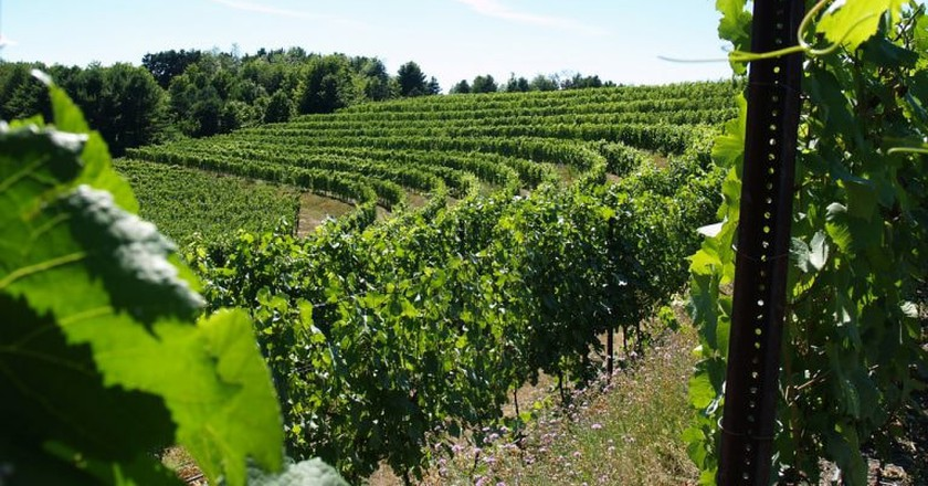 Black Star Farms Winery