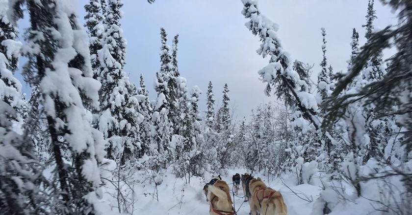Dog sledding in Fairbanks, Alaska | © Bailey Berg