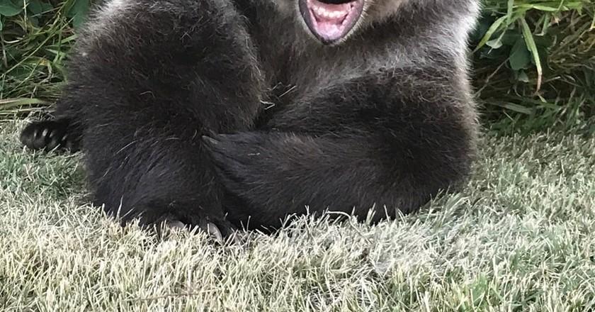 Berkley the bear