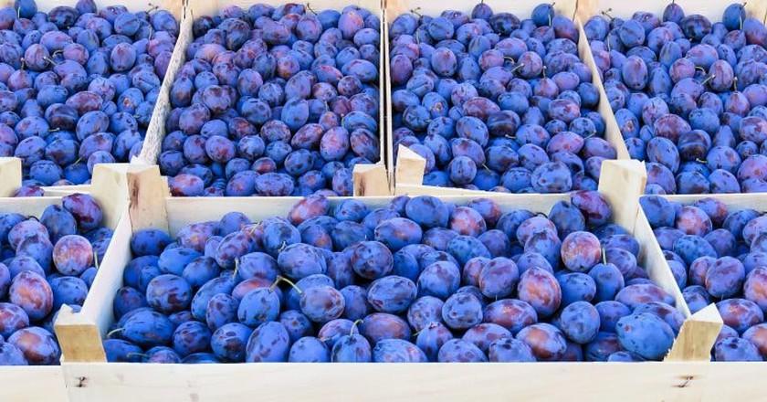 Serbia's favourite fruit, the glorious plum