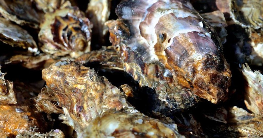 Alaskan oysters are completely unique