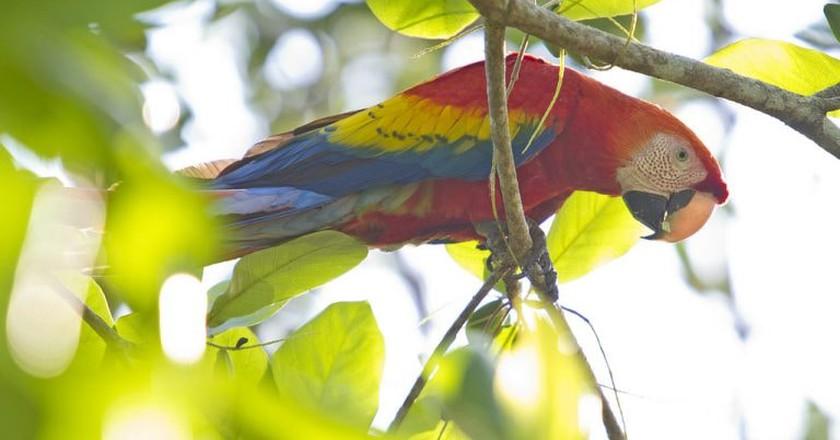 Rainforest beauty