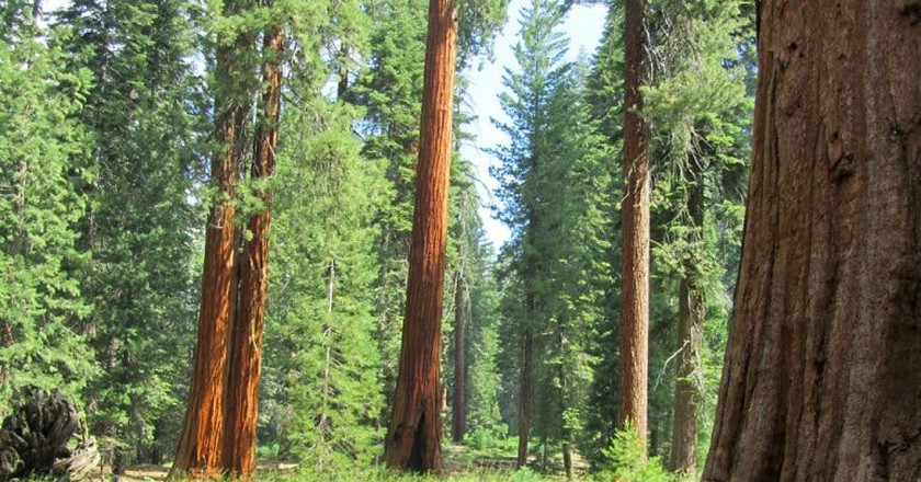 Sequoia National Park where glowing millipedes can be found at night