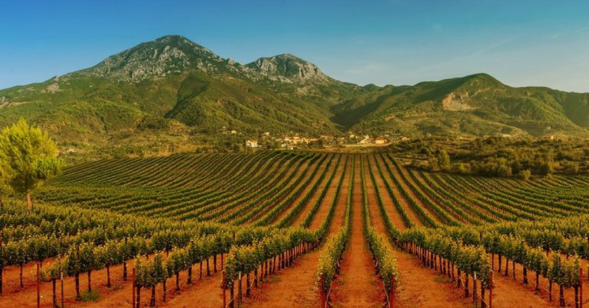 The vineyards of Kantina Kallmeti, a famous Albanian winery where is produced one of the best wines of the Balkans