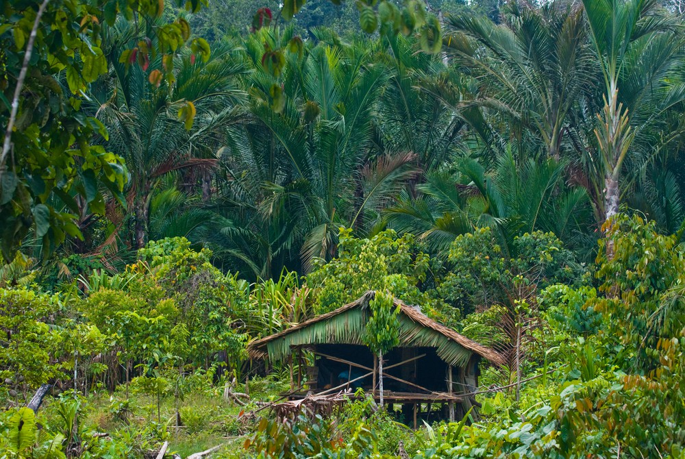 Traditional house in the Mentawai jungle | © Gudkov Andrey/Shutterstock