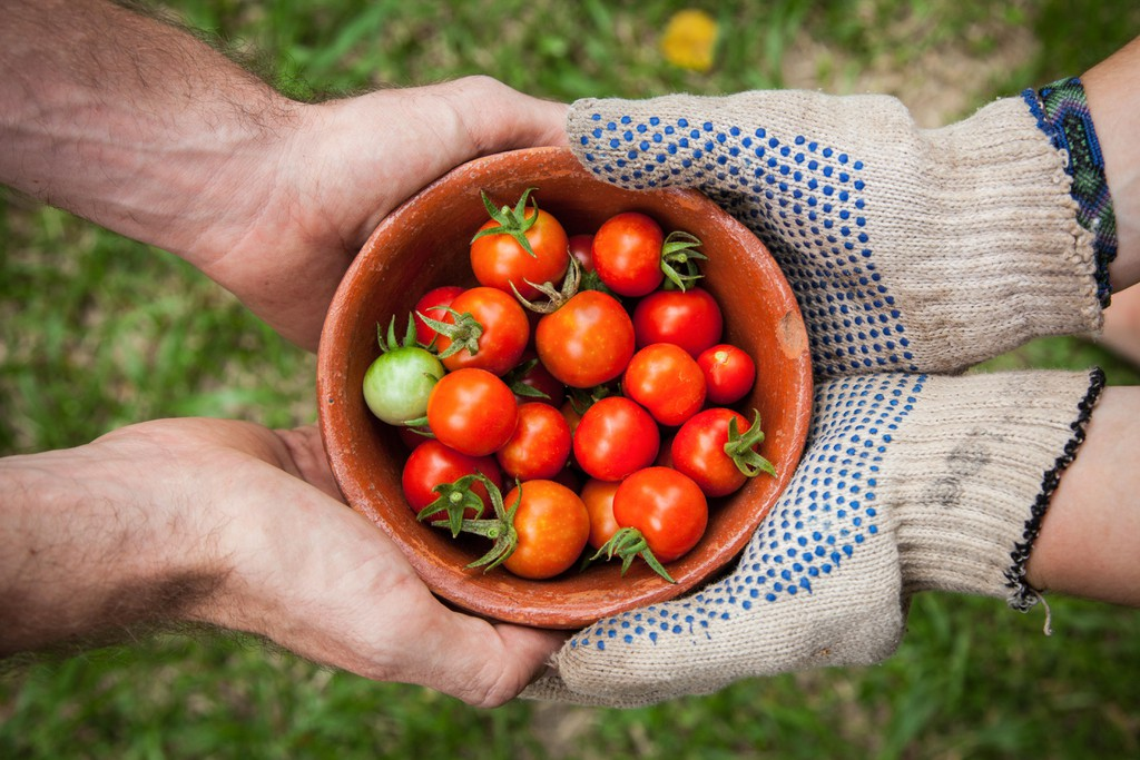 The Best Organic Farms to Visit in India