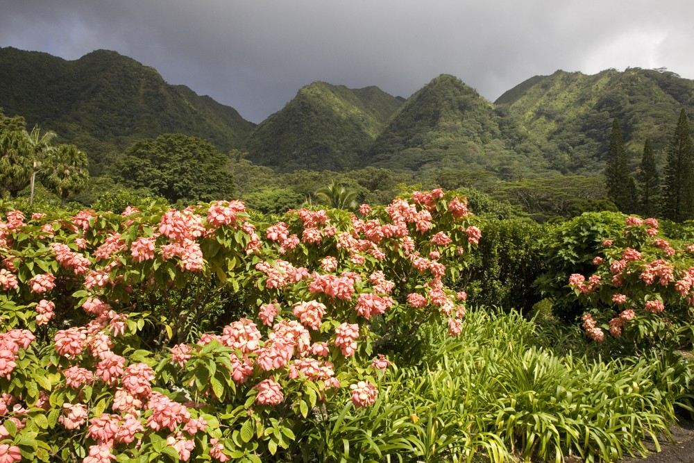 Hawaii S Most Beautiful Gardens Green Spaces