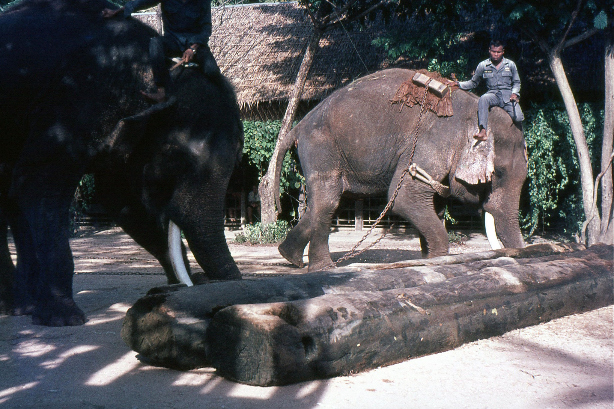 How The Elephant Became Thailands National Symbol