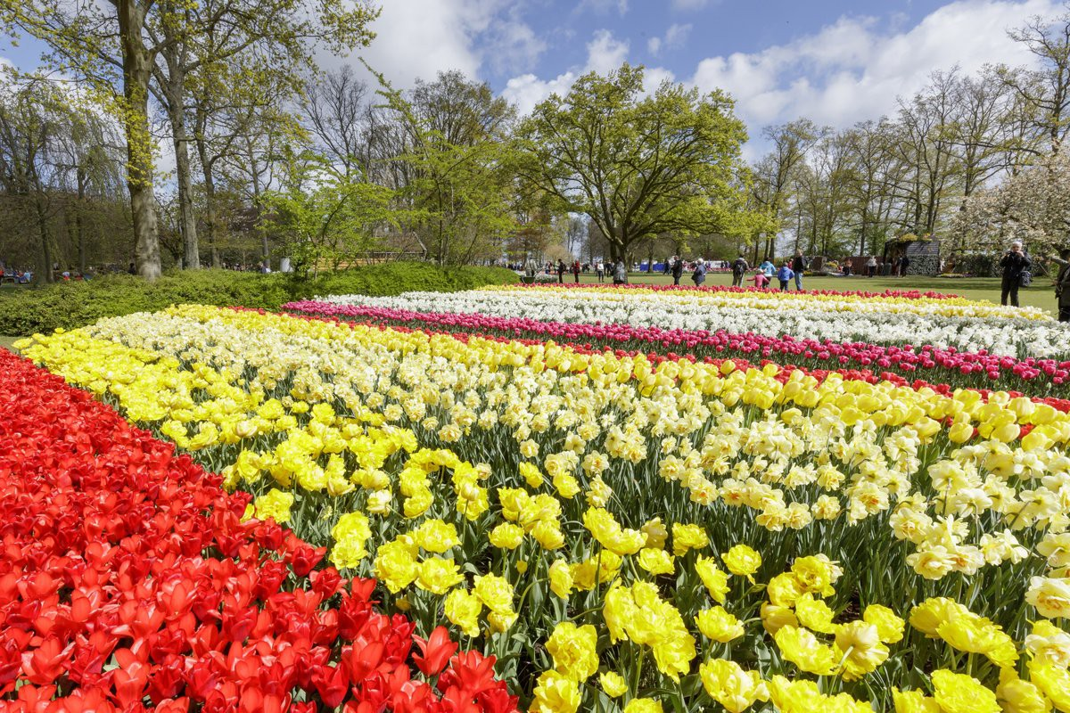 The Best Places to See Tulips in The Netherlands