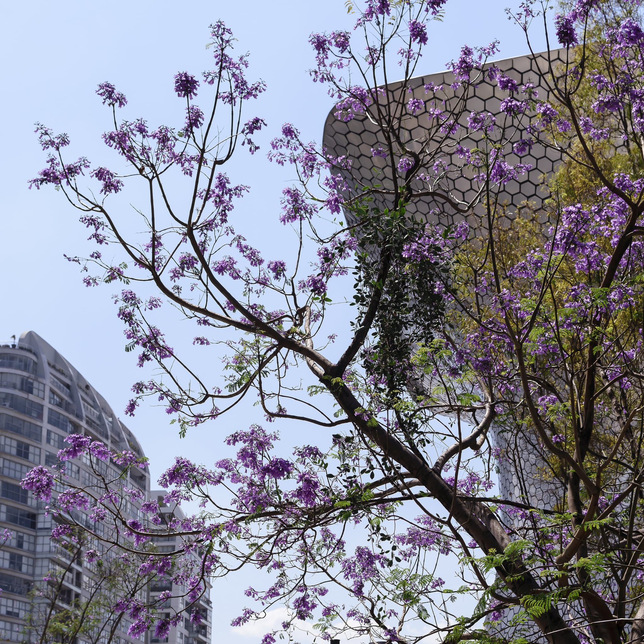 Mexicos Incredible Trees Plants And Flowers And Where To Find Them