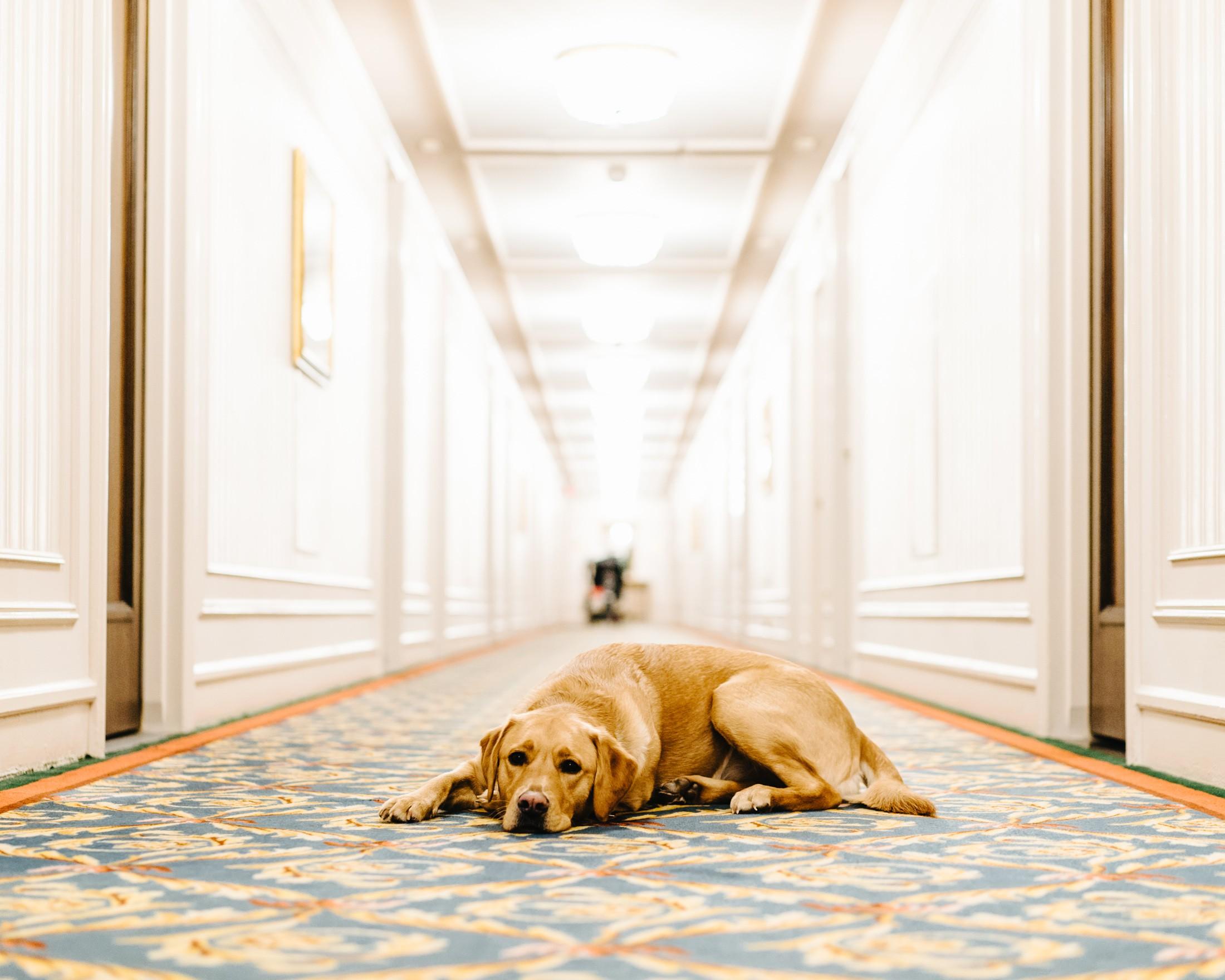The Fairmont's Canine Ambassador, Ella