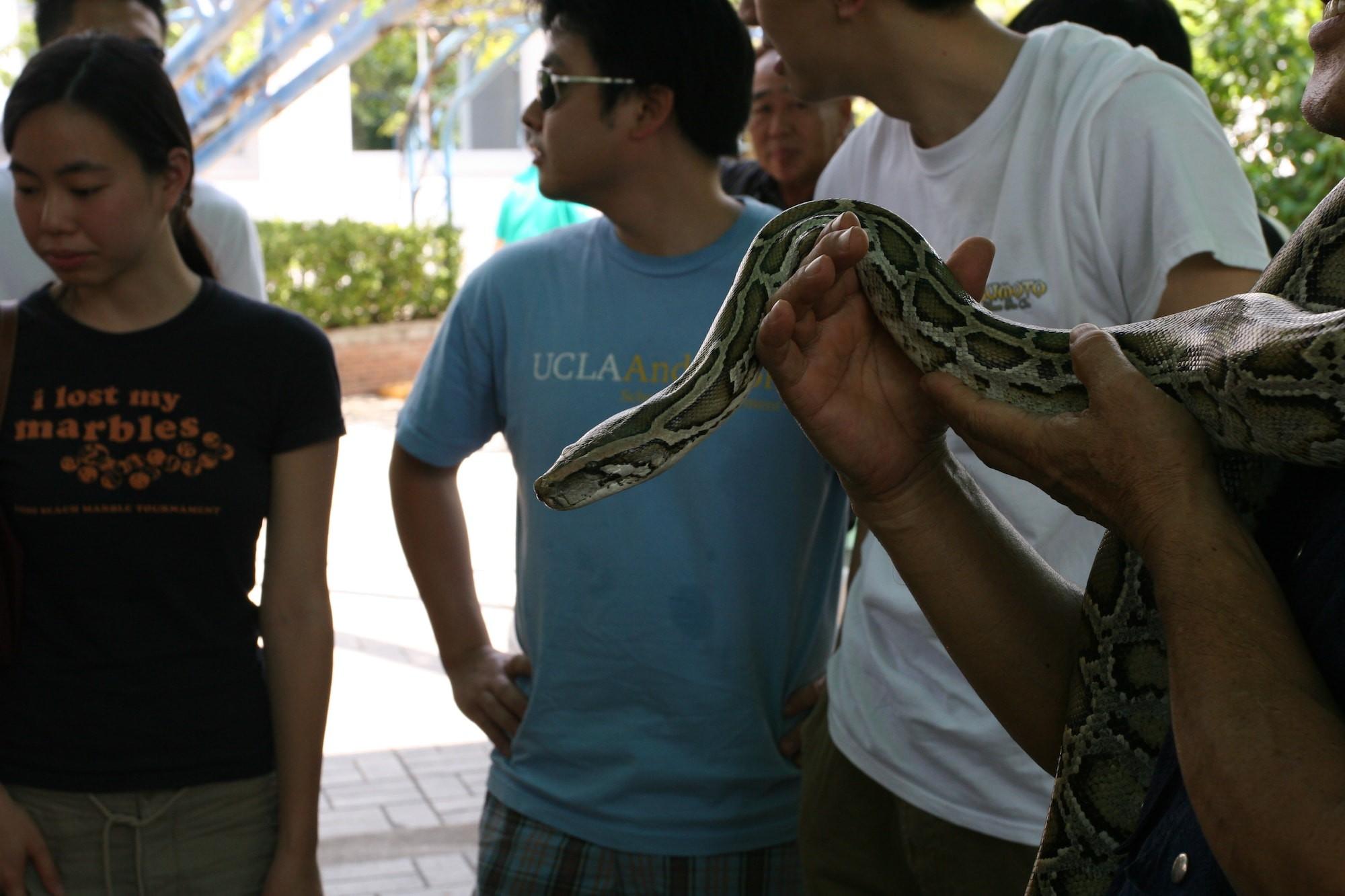 A man handles a python, Bangkok Snake Farm