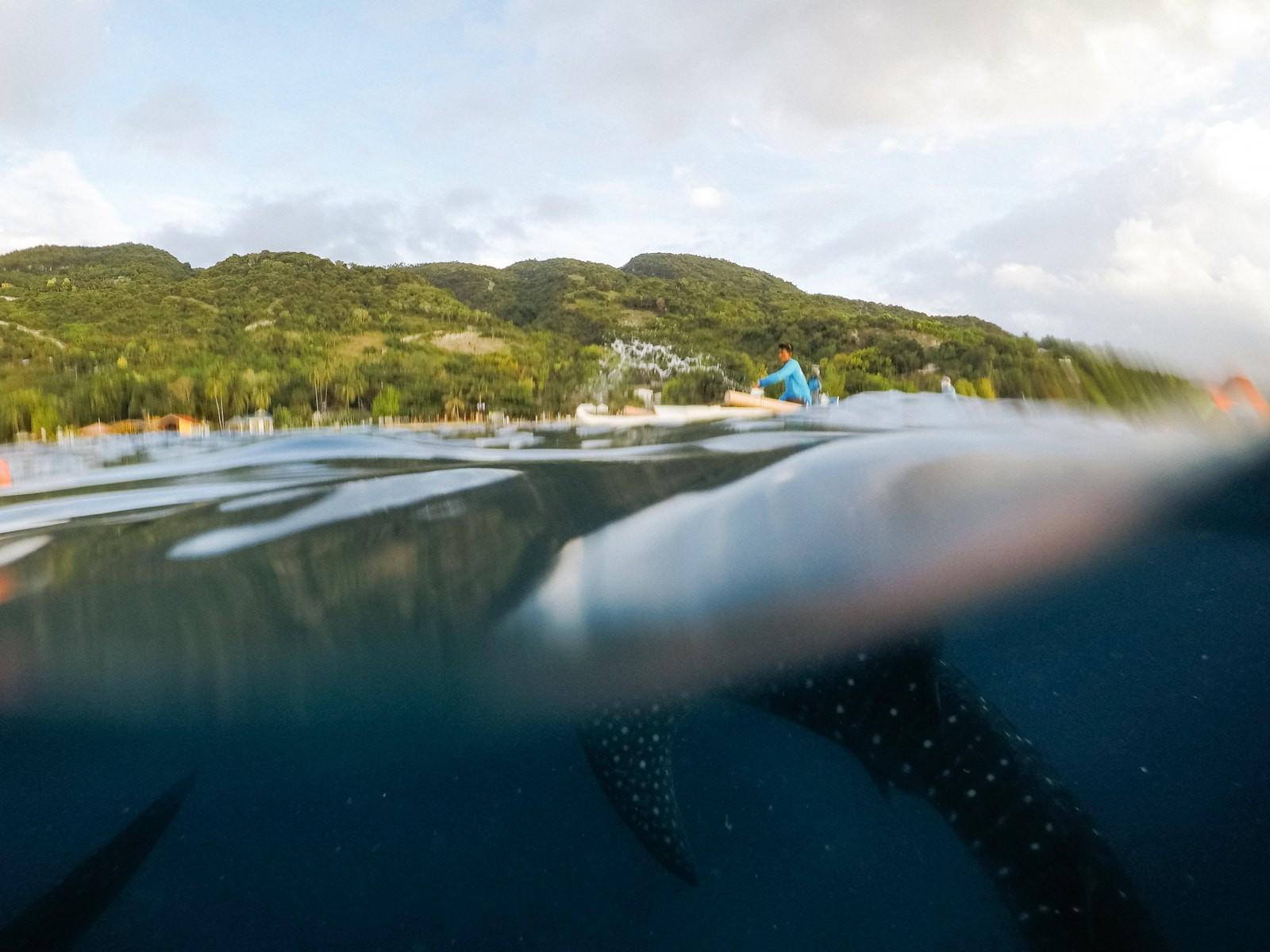 Whale Sharks-Oslob-Phillipines