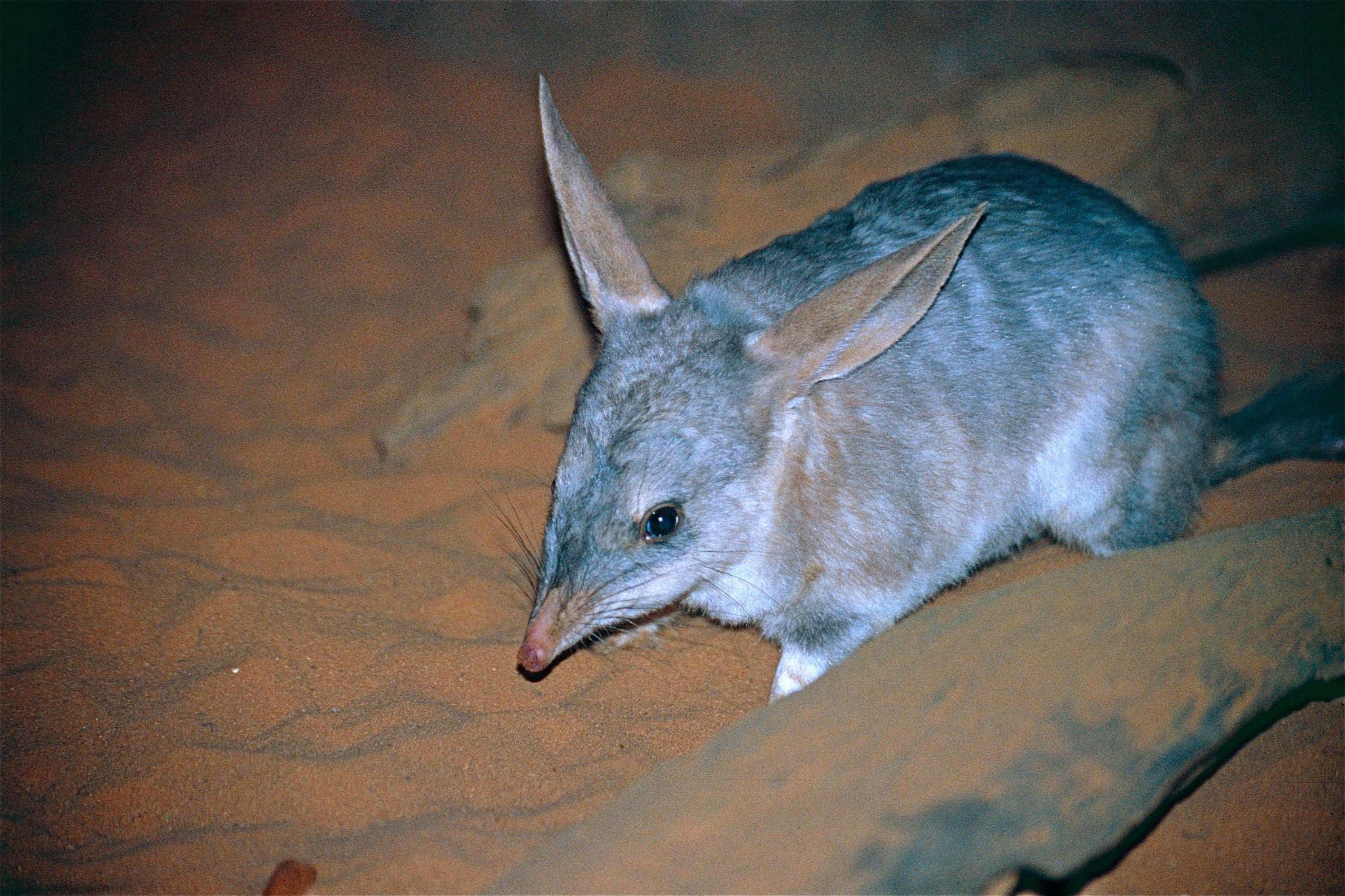 The 11 Weirdest Animals in Australia