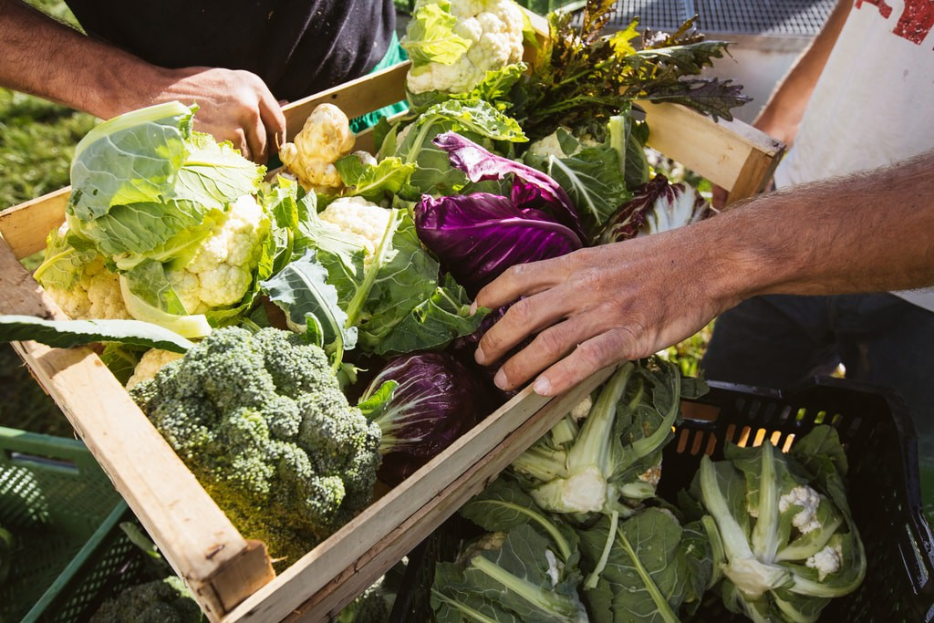 Kết quả hình ảnh cho greengrocer