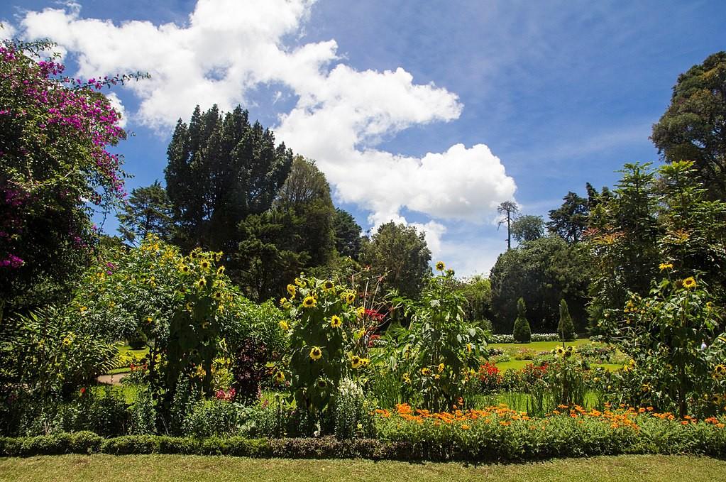 The Top 11 Things to See and Do in Nuwara Eliya, Sri Lanka