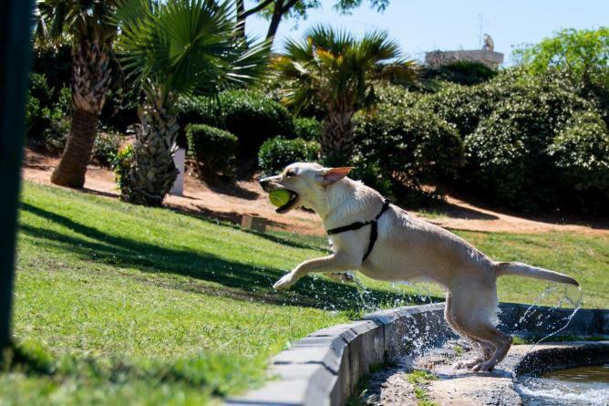 Tel Aviv S 5 Best Places For Dog