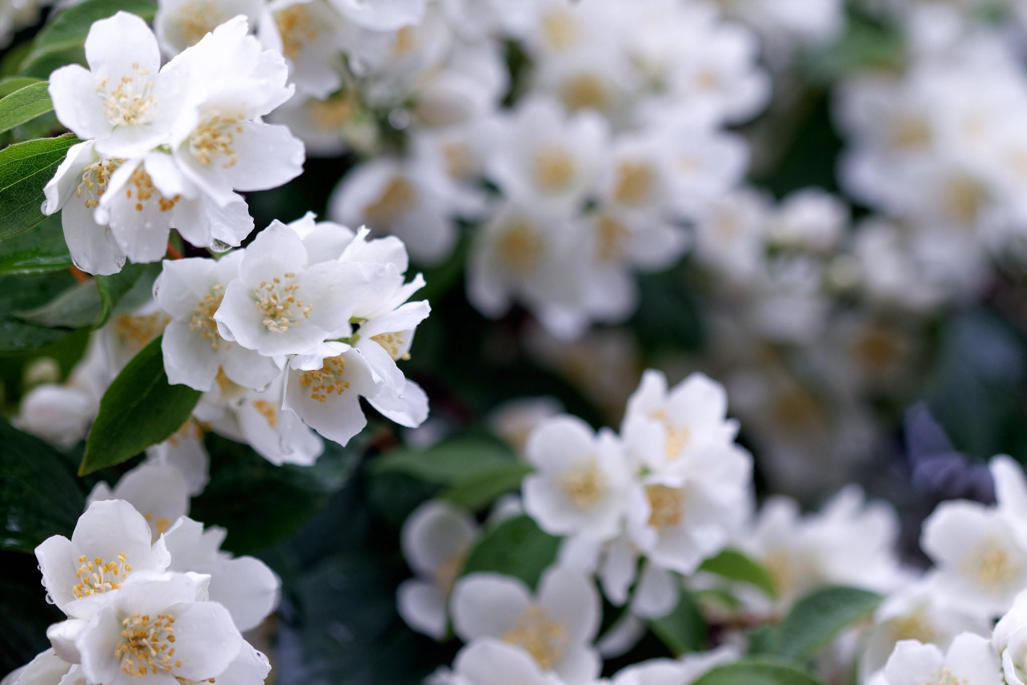 11 beautiful flowers and plants native to thailand izmirmasajfo