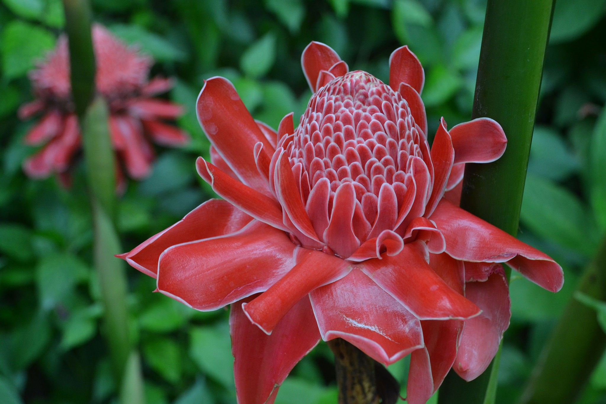 11 Beautiful Flowers And Plants Native To Thailand