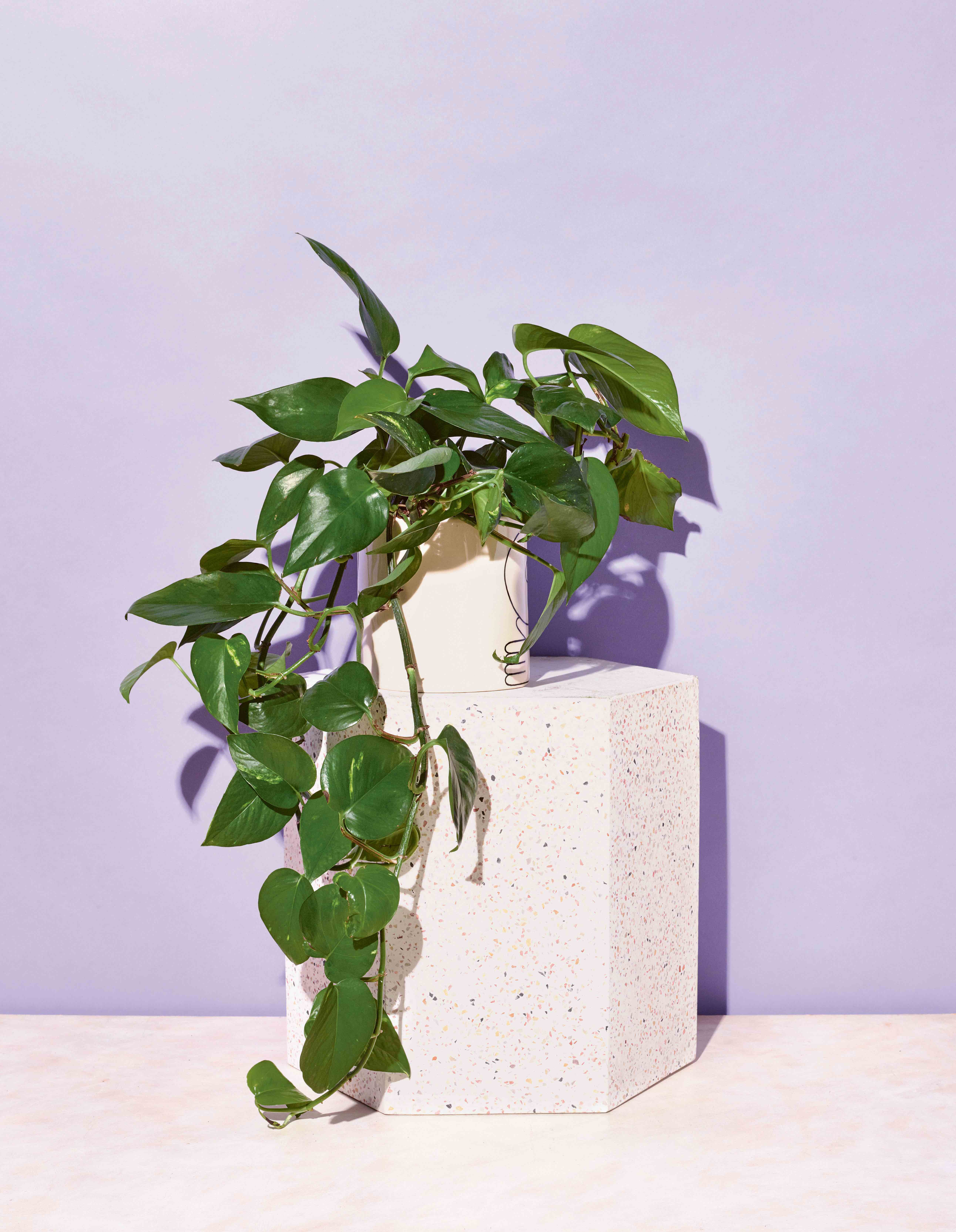 12 House Plants That Are Surprisingly Hard To Kill