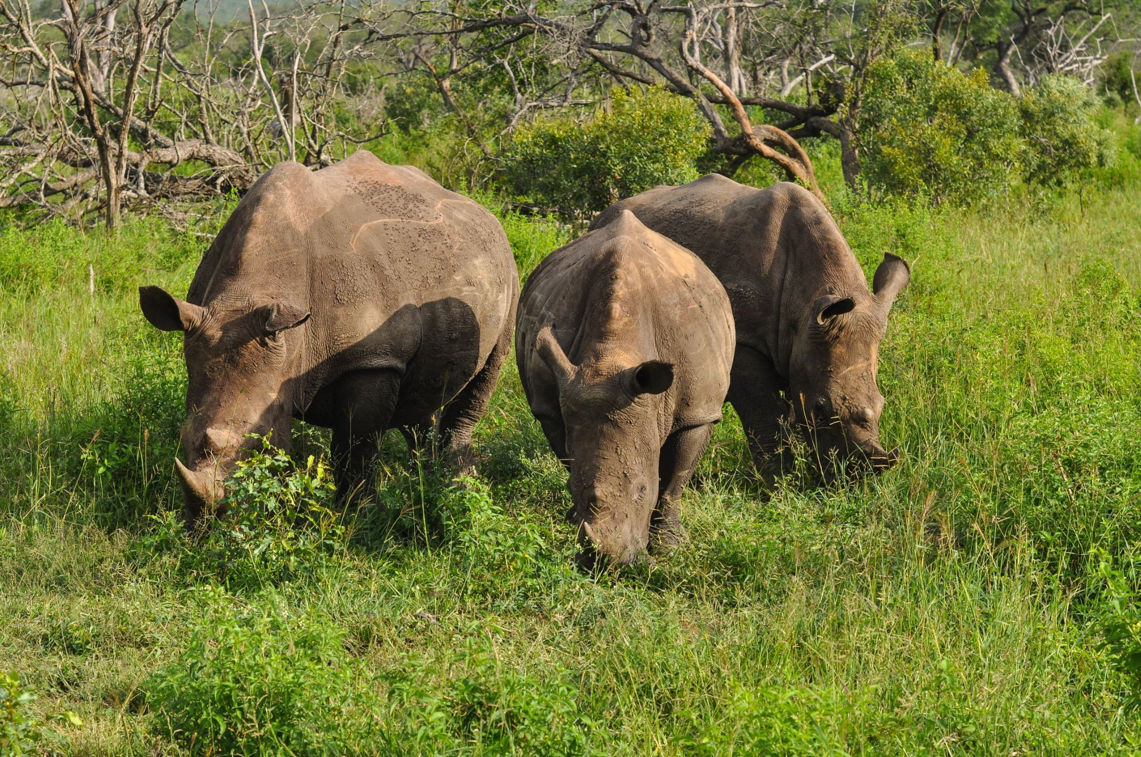 How eSwatini is Leading the Way in Rhino Conservation