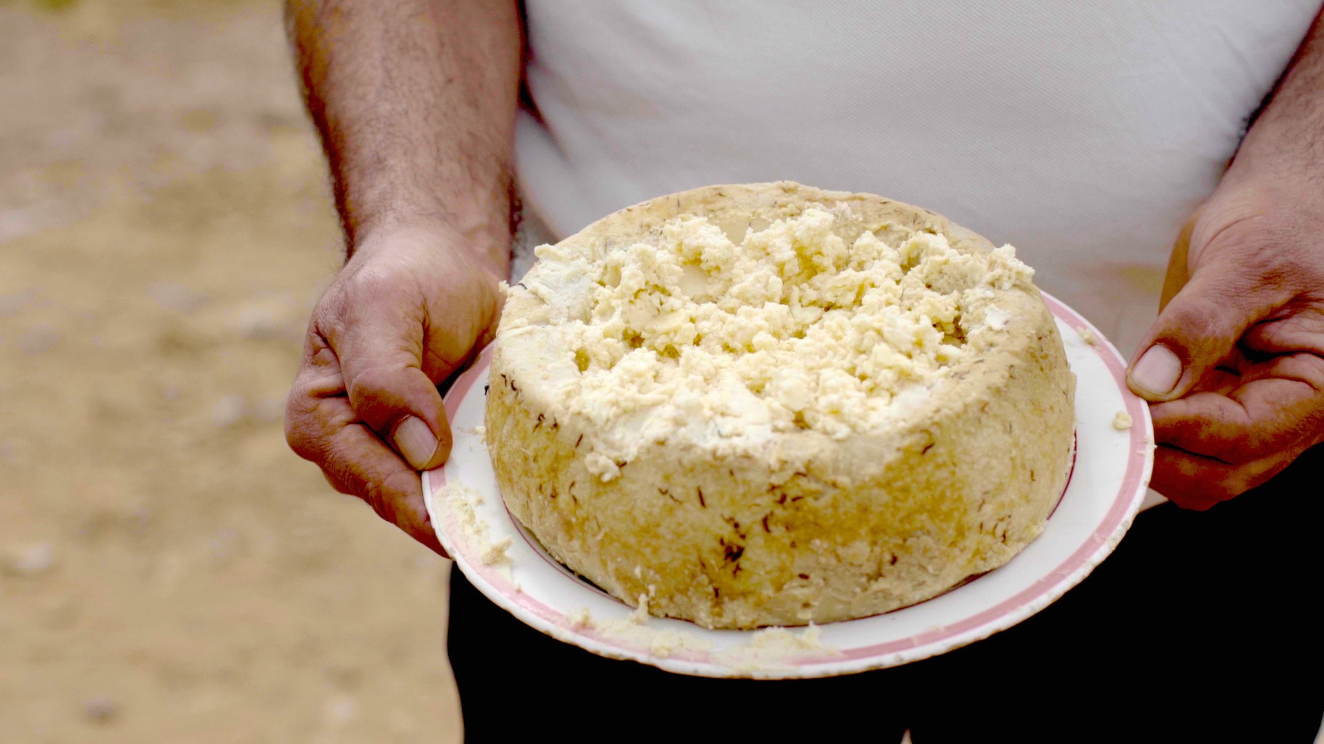 Everything You Need To Know About Italy's Casu Marzu Cheese