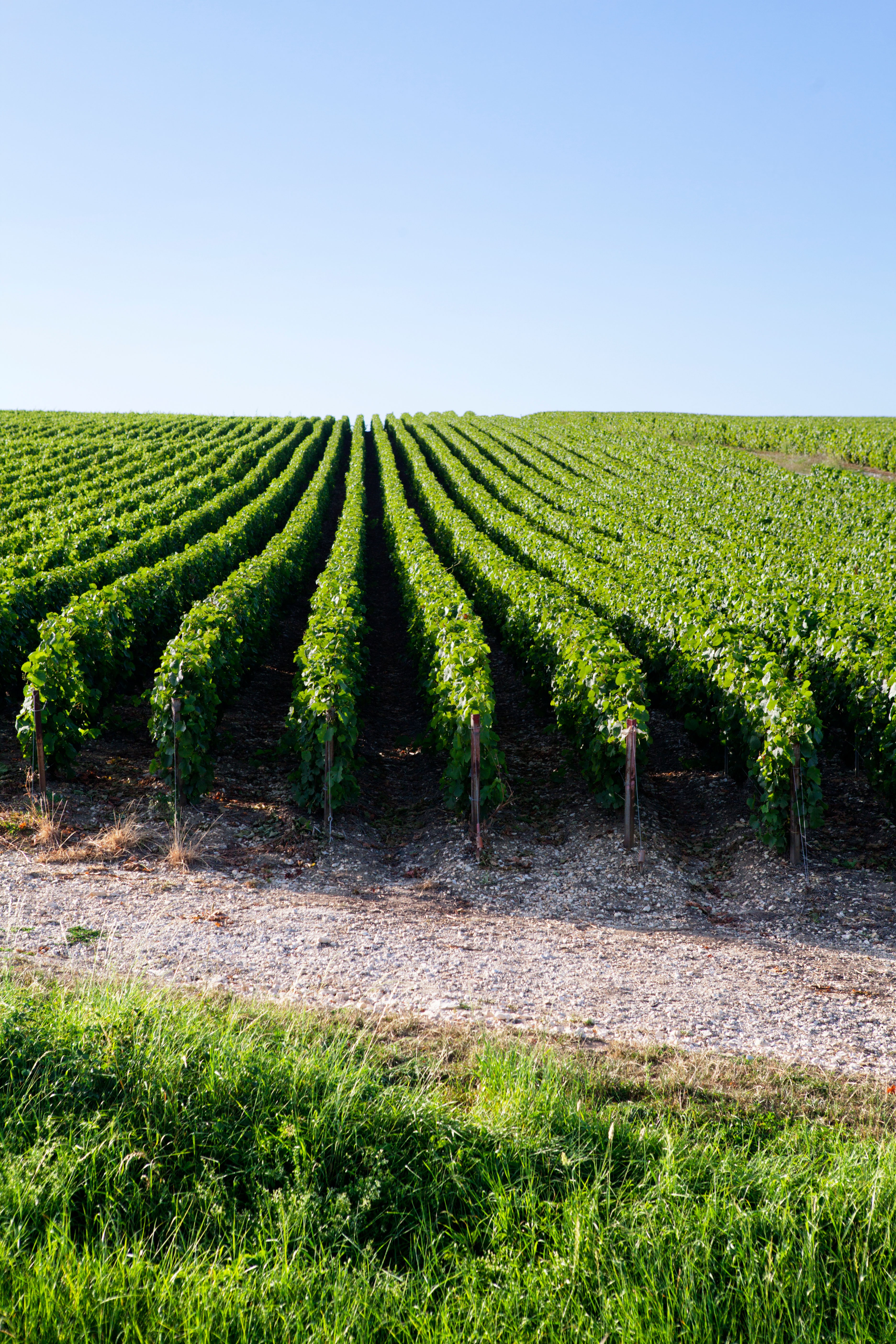 Champagne vineyards perspective, Champagne Ardenne, France