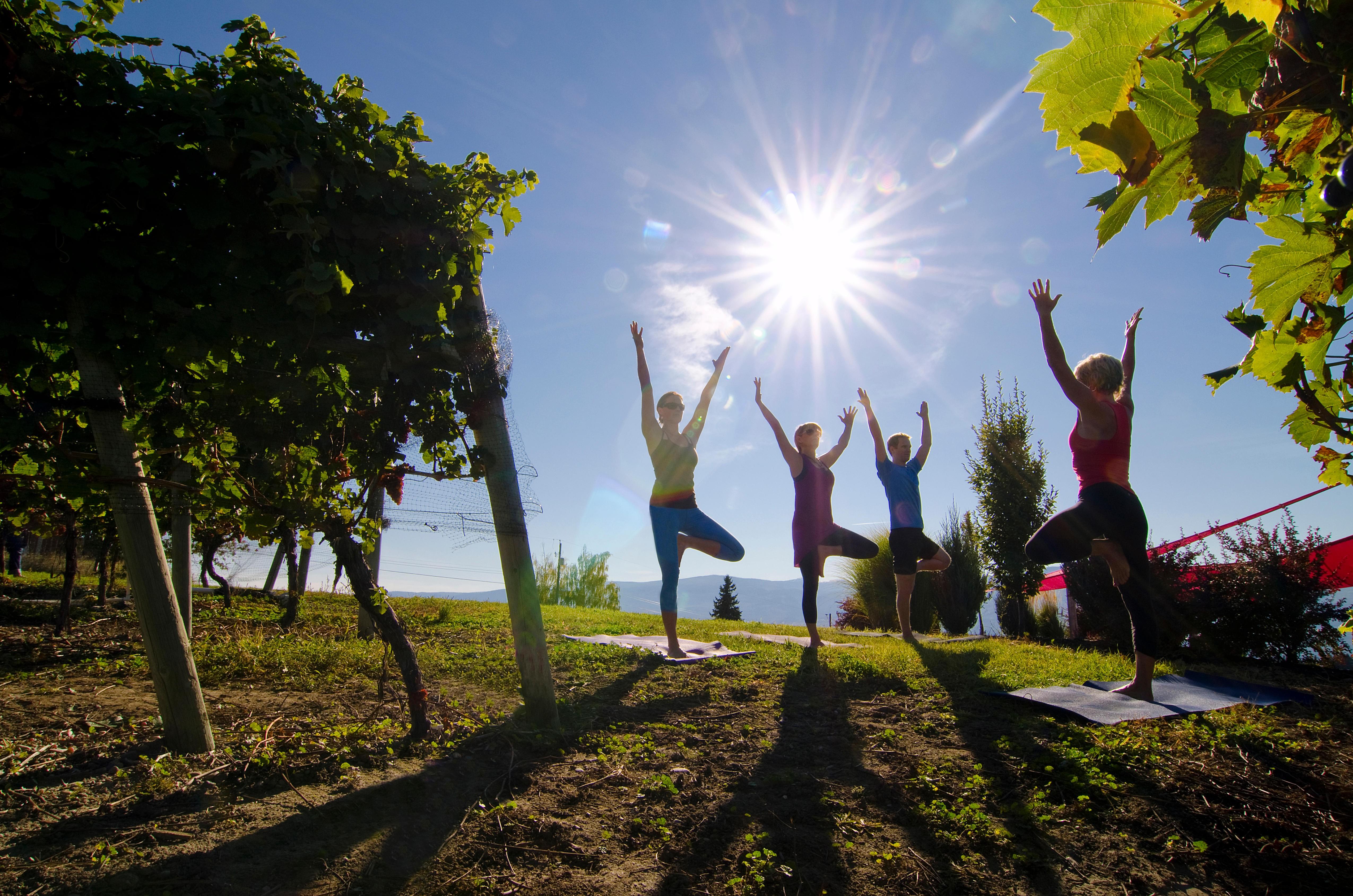 Yoga in the vineyard, Mt Boucherie Estate Winery, West Kelowna, British Columbia, Canada.
