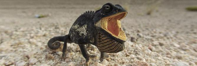 Chameleon Politics And Corruption: The Poetry Of Jack Mapanje
