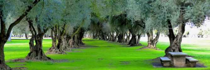 The Best Parks in Fresno, California