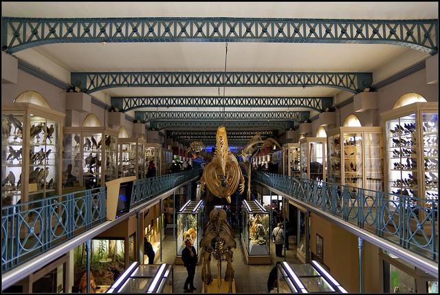 Musée d'Histoire Naturelle de Lille   ©Guillaume DELEBARRE/Flickr