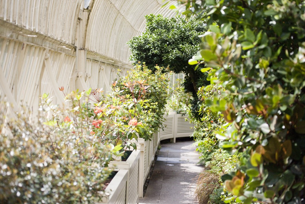 Botanic Gardens- Dublin   © William Murphy / Flickr