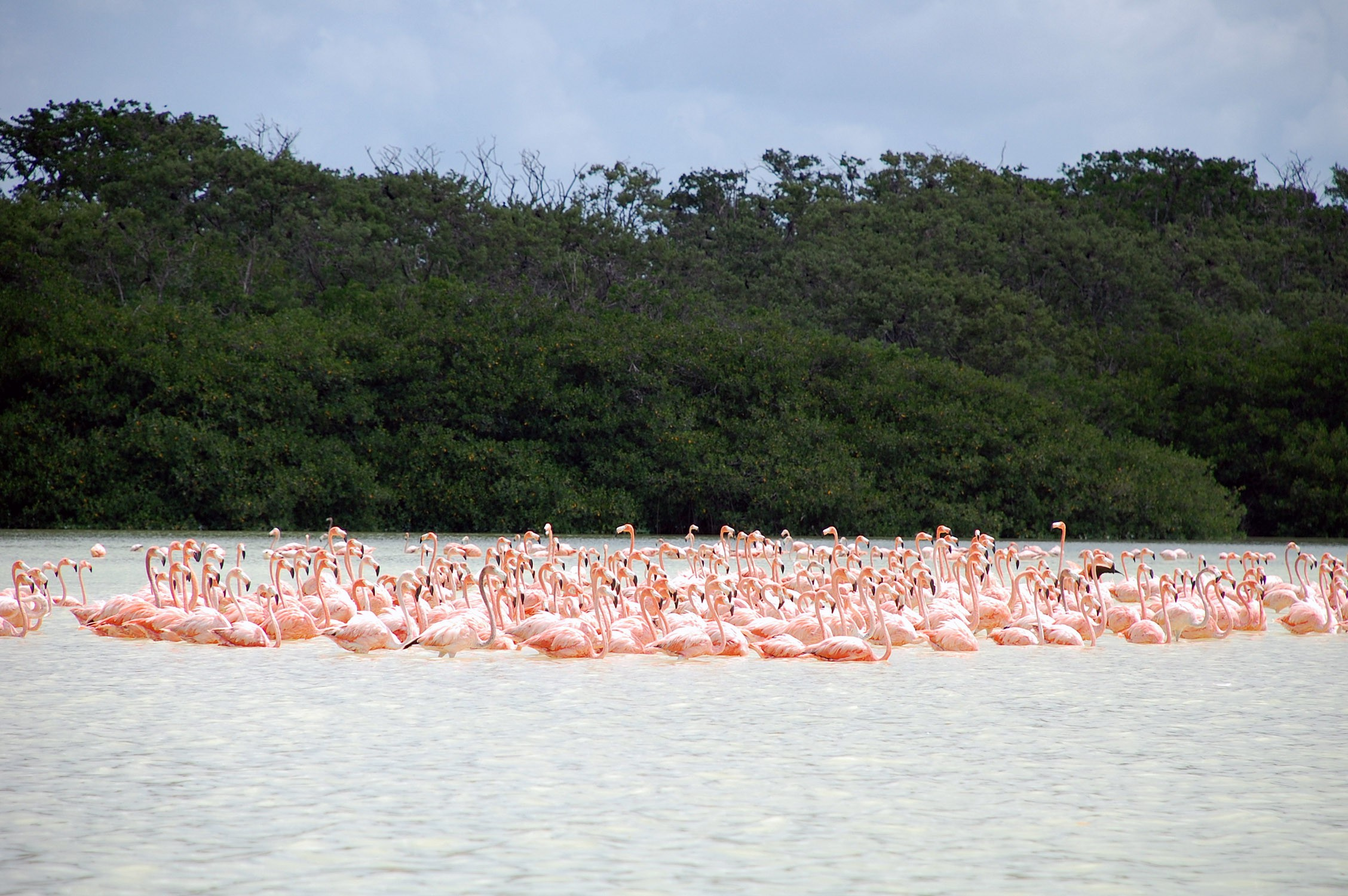 Flamingos in Yucatán | © Peyri Herrera/Flickr